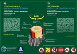 Korčula - drvored čempresa
