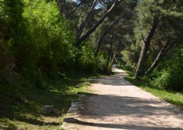 komunikacijski putevi u park-šumi