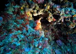 Istraživanje podmorja Sv. Andrija