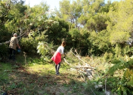 Akcija uklanjanja pajasena u Uvali Vučine